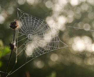 11 Crimini contro il Web Marketing e la sua comunità